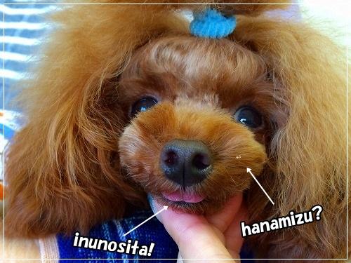 hanamizu.jpg