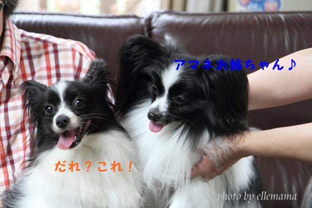 IMG_9565・・・ャ・ヲ縺輔s_original (1)