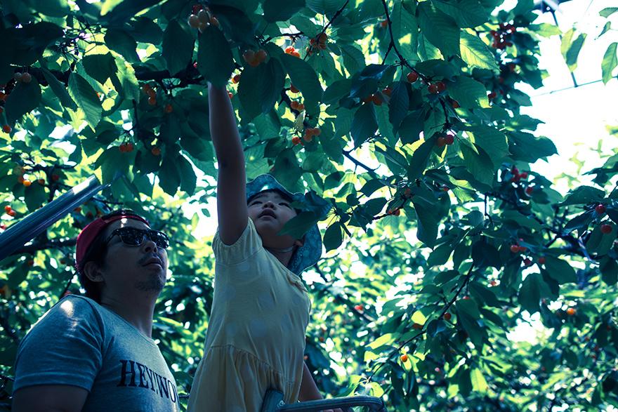 cherry2015-5.jpg