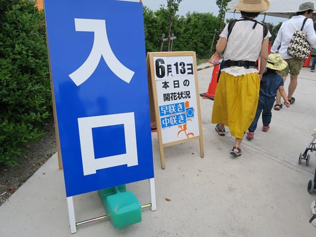 大阪舞洲ゆり園 (7)