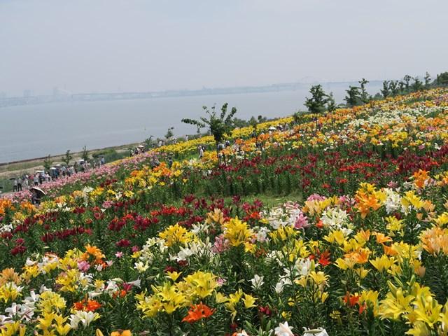 大阪舞洲ゆり園 (13)