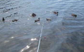 fishing07091510.jpg