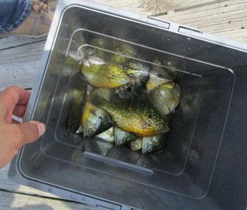 fishing07091513.jpg