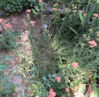 garden07011501.jpg