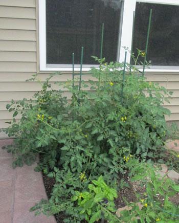 garden07011503.jpg