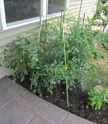 garden07011504.jpg