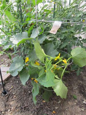 garden07011505.jpg