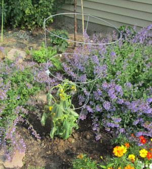 garden07011508.jpg