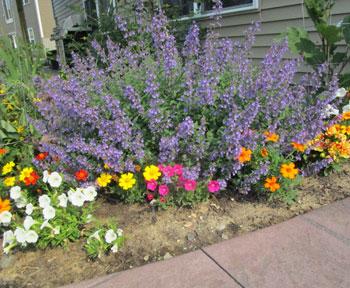 garden07011509.jpg