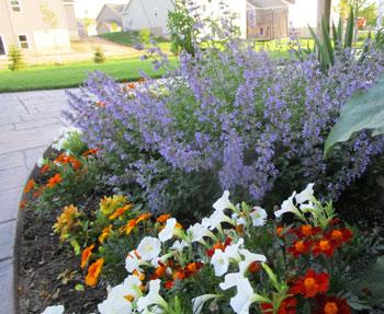 garden07071503.jpg