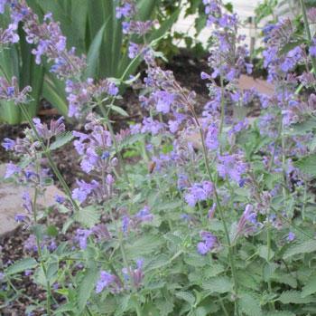 garden07071504.jpg