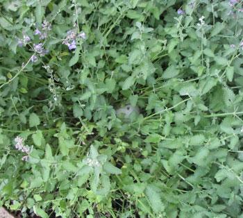 garden07071505.jpg