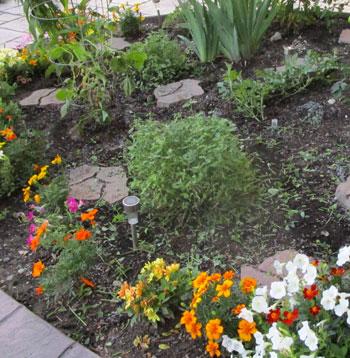 garden07071507.jpg