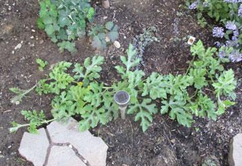 garden07071508.jpg