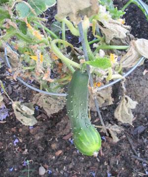 garden07071509.jpg