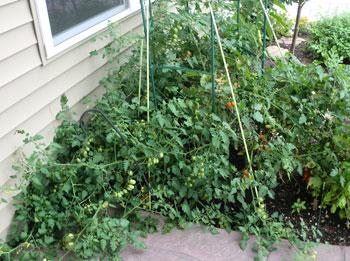 garden07291501.jpg