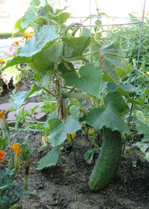 garden07291506.jpg