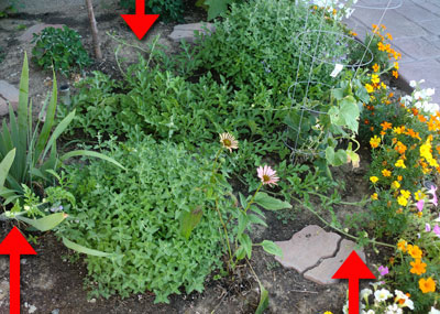 garden07291507.jpg