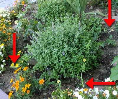 garden07291508.jpg