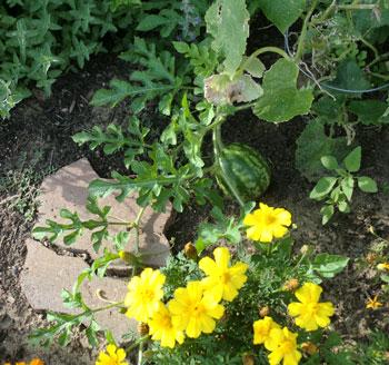 garden08081502.jpg