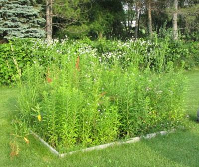 weeds07101502.jpg