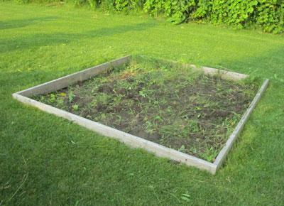 weeds07101504.jpg