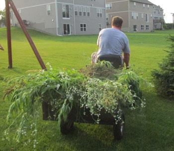 weeds07101507.jpg