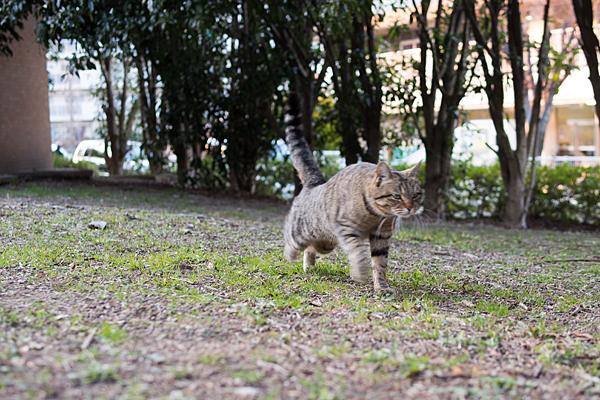 猫風景-2