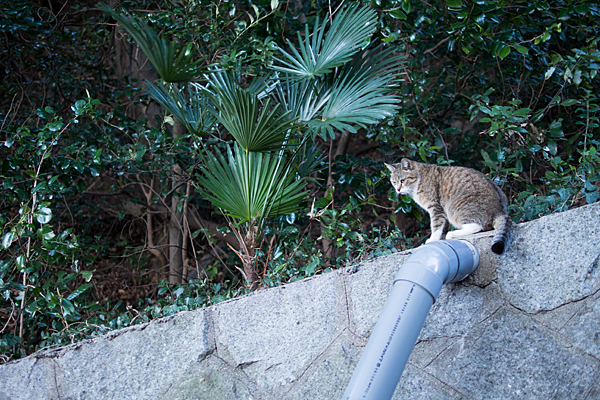 猫風景-3