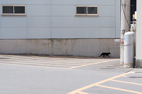 猫風景-4