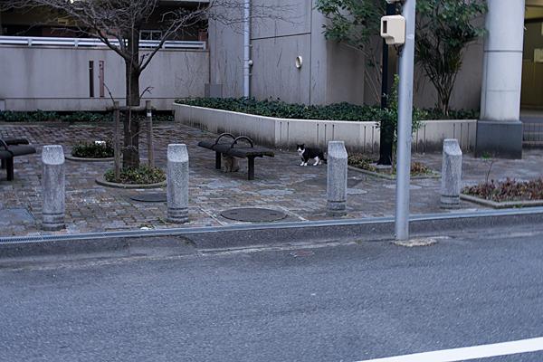猫風景-5