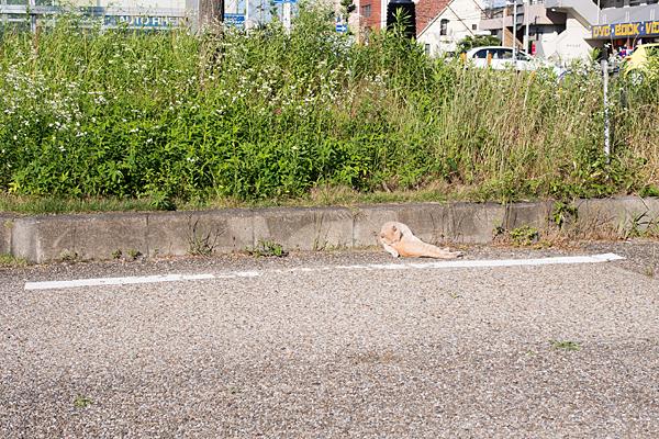 猫風景-9