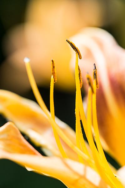 東山植物園-10