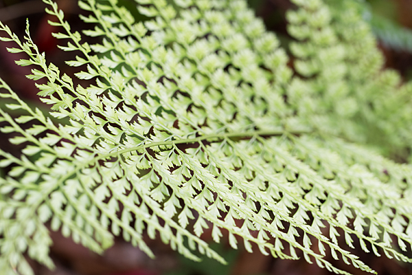 東山植物園-6