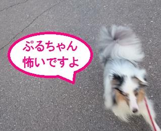 MOV_1472(5).jpg