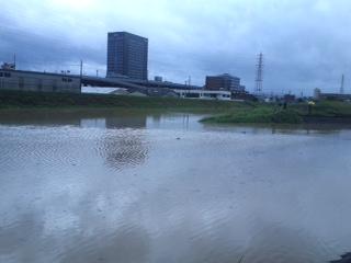 伏見区氾濫2