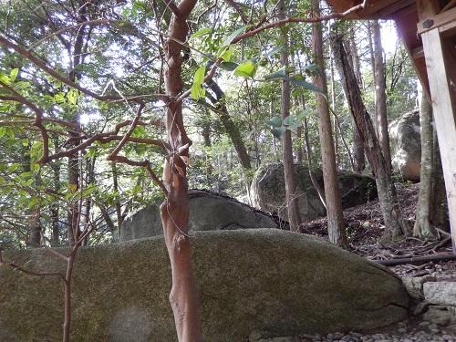 岩尾神社境内の巨石