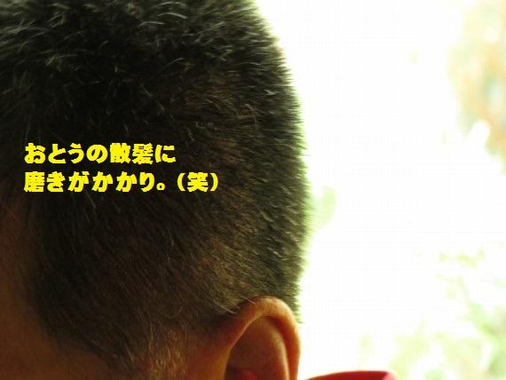 20150731-07.jpg