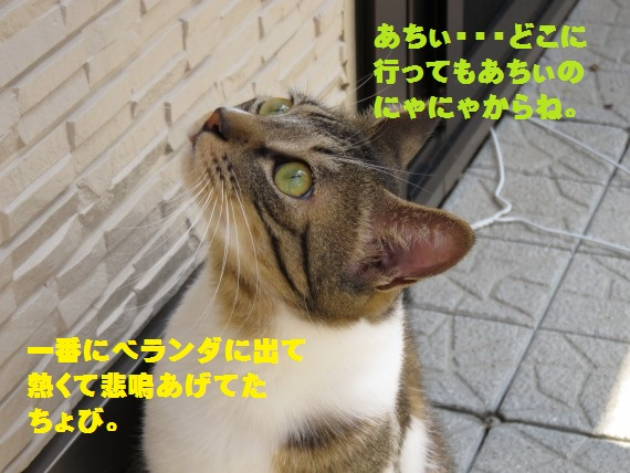 20150801-04.jpg