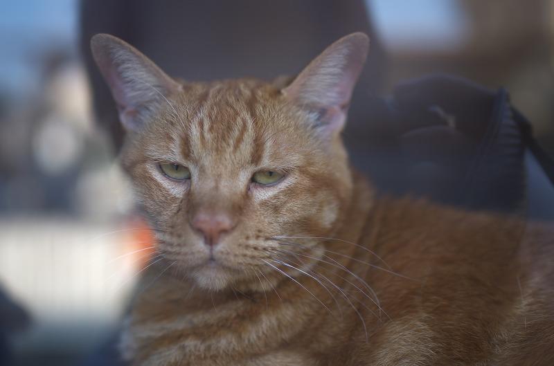大和郡山市 窓猫