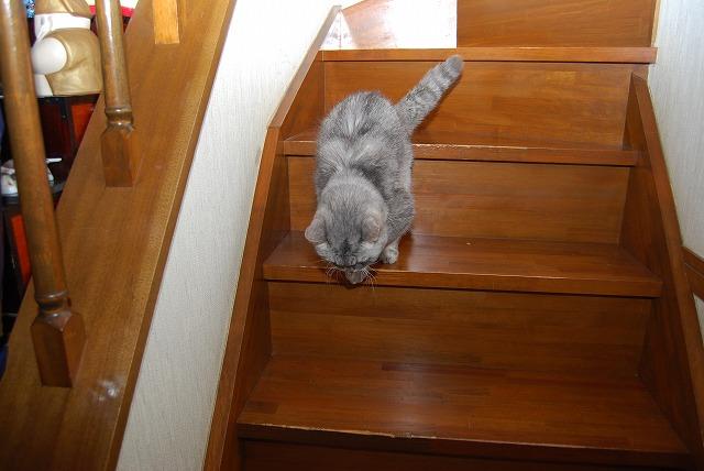 れンちゃん 階段down1