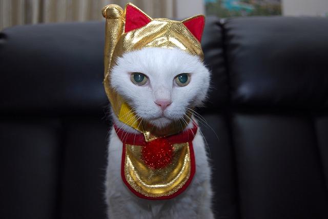 あいちゃん招き猫