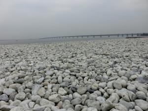 20150705_29マーブルビーチ