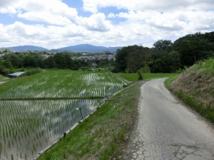 20150725_26あまの街道田園風景