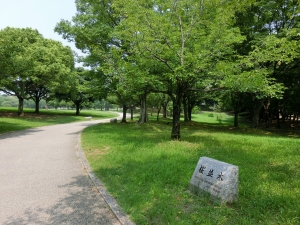 20150802_13大仙公園桜並木