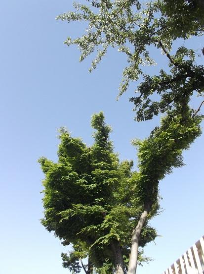 樹1014