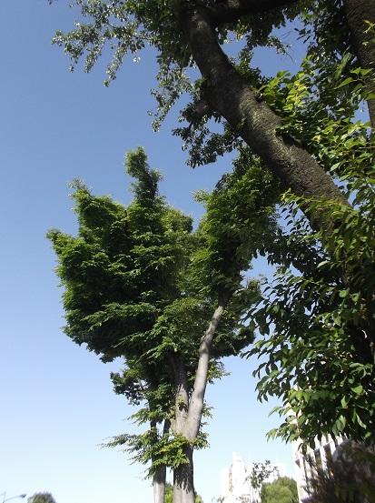 樹1012