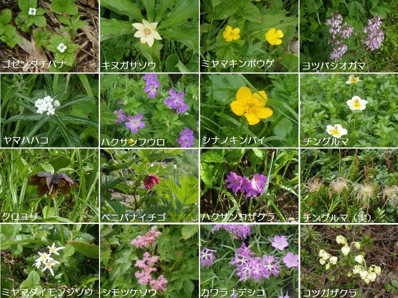 hakusan_flowers.jpg