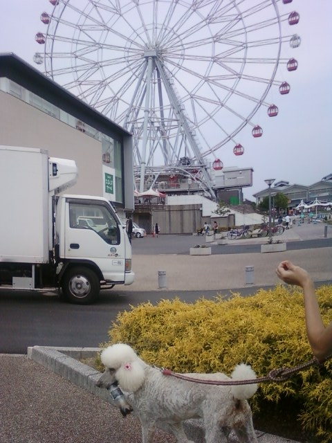 画像-0021