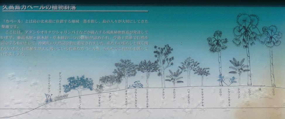 カベールの植生